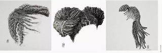 Three sketches of natural hairstyles by visual artist Sal Steiner