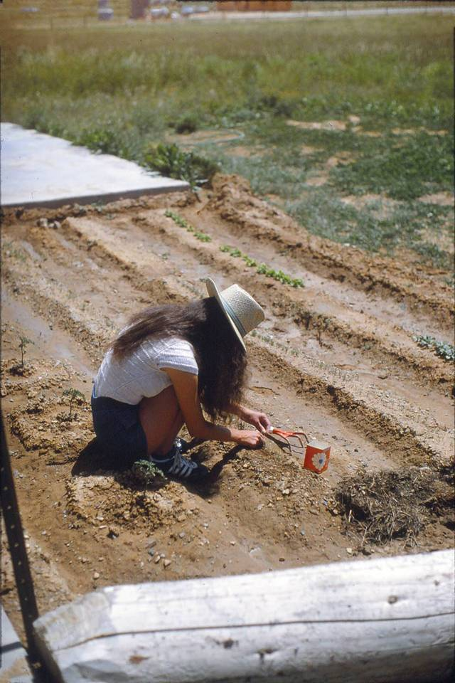 Image of a woman in a hat crouched over seedlings she is planting in a sunny garden.