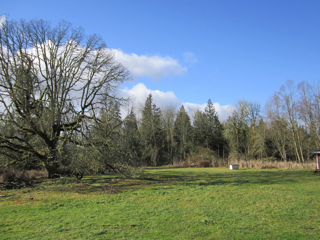 A green pasture with a row of trees behind it.