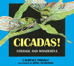 "<font color=""red""><b>Cicadas! Strange and Wonderful</b></font>"
