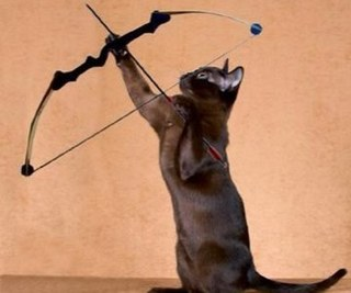 A black cat aims a bow and arrow at the sky.